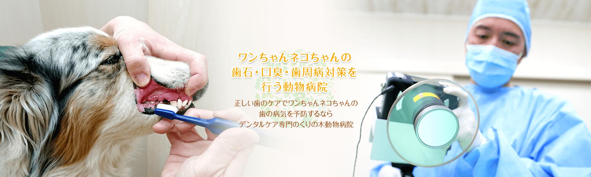 ワンちゃんの歯石・口臭・歯周病対策を行う動物病院
