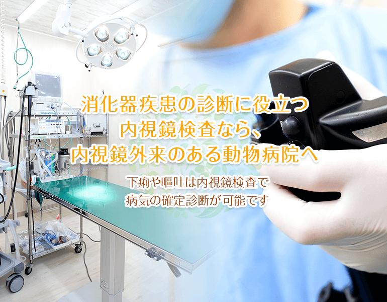 消化器疾患の診断に役立つ内視鏡検査なら、内視鏡外来のある動物病院へ