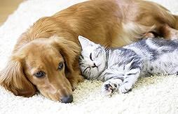 犬猫に悪影響のある食べ物